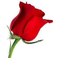 beaute-des-soins-aux-roses-2