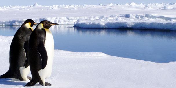 antarctique-1