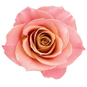 cosmetiques rose