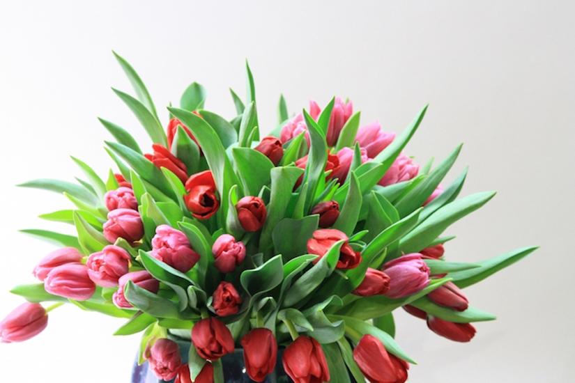 fauchois-fleurs-3