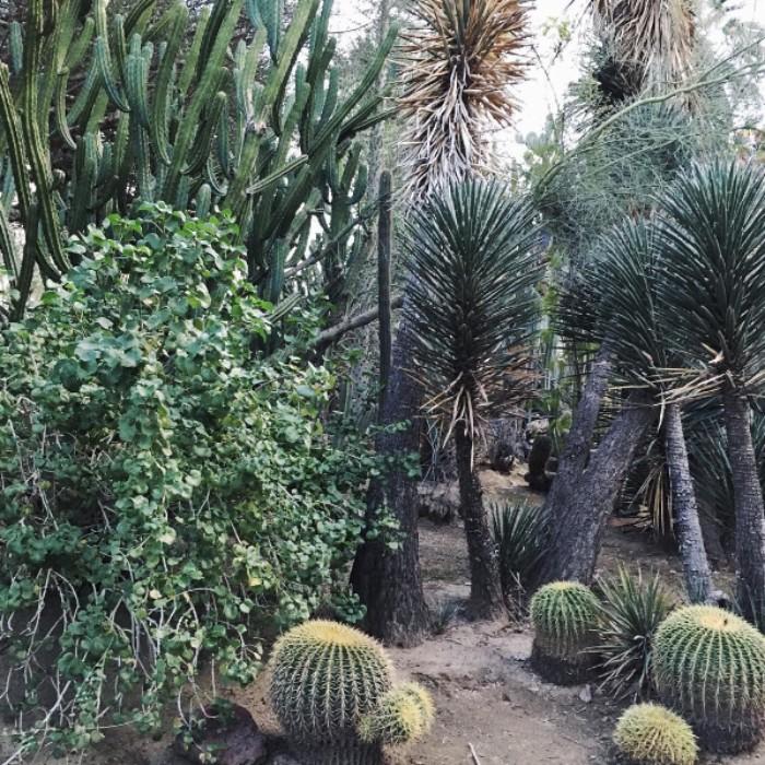Jardin botanique Moorten, sur la Palm Canyon Drive