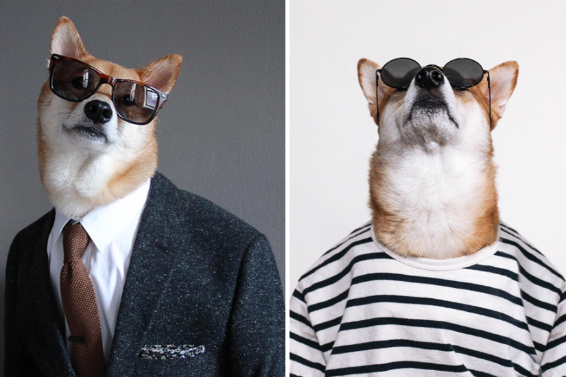 «Menswear Dog»: le chien qui a plus de style que notre chum