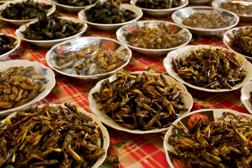 ed641b47-bb55-4945-b9cf-f37646b1960b-1-les-insectes-dans-notre-assiette-jpg