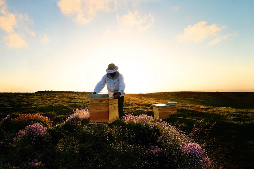guerlain_unesco_abeilles