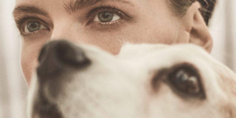 c-est-mon-histoire-vieux-chien-15-ans