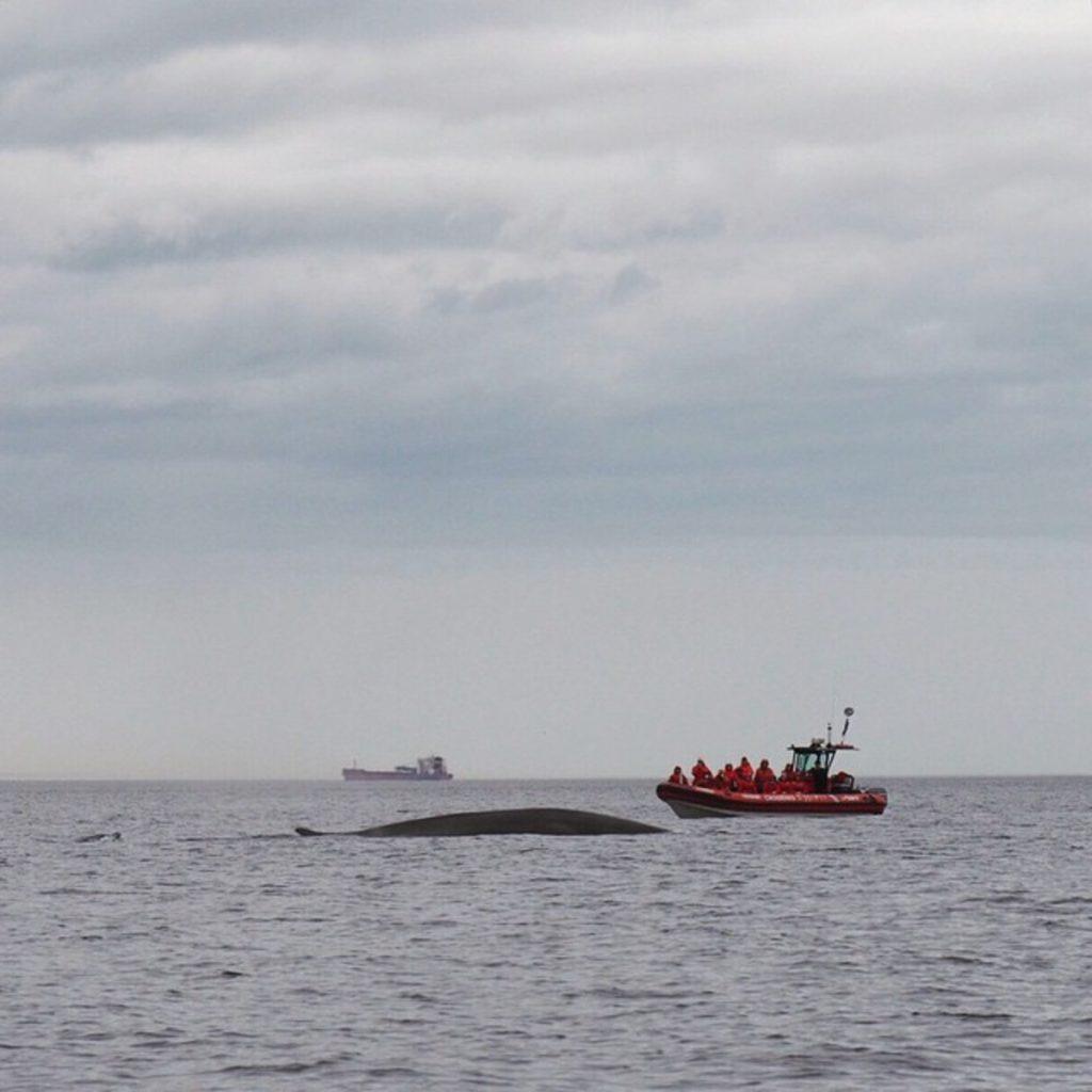 Croisière aux baleines à Essipit