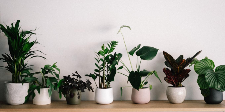 meilleure-plante-pour-vous-selon-votre-signe-astro-ellequebec