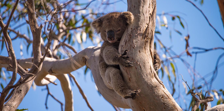 voyager-autrement-credit-craig-wickham_exceptional-kangaroo-island