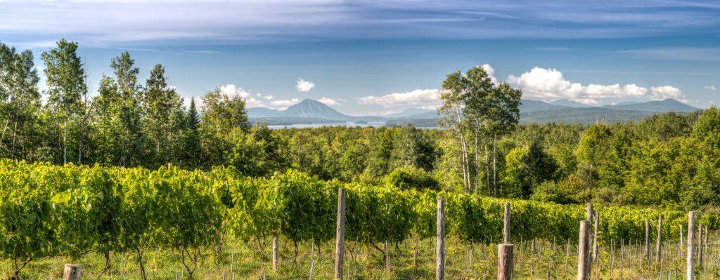 La route des vins des Cantons-de-l'Est