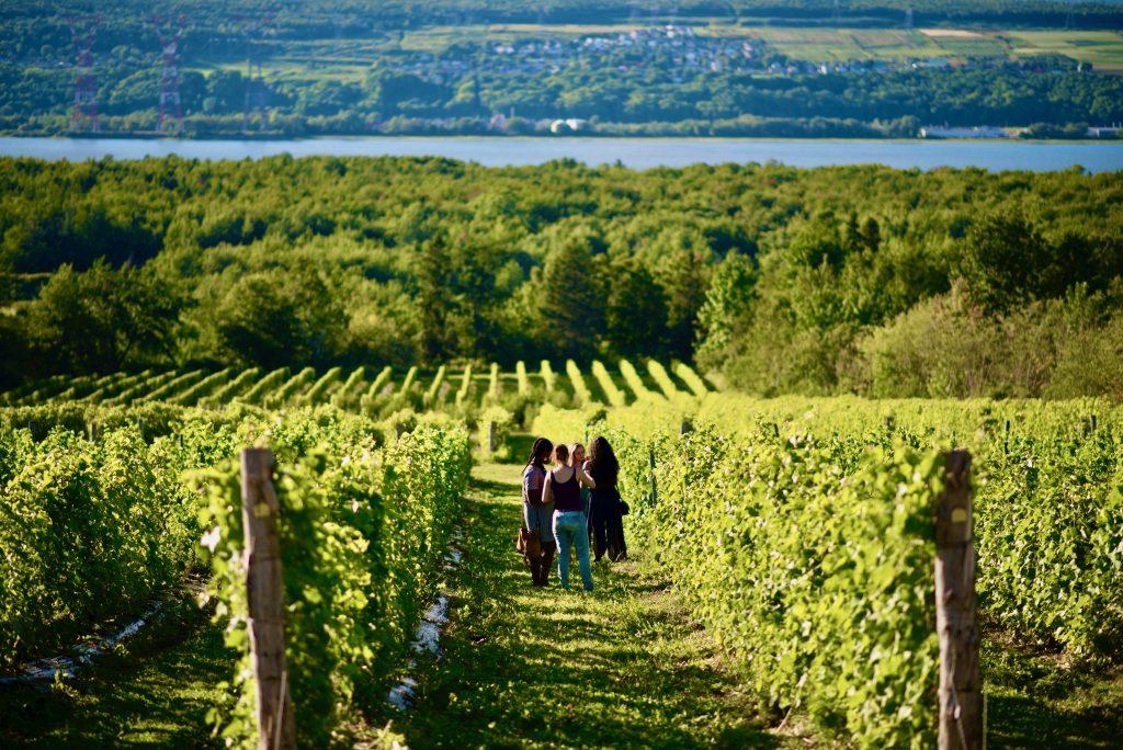 Vignoble de l'Isle de Bacchus